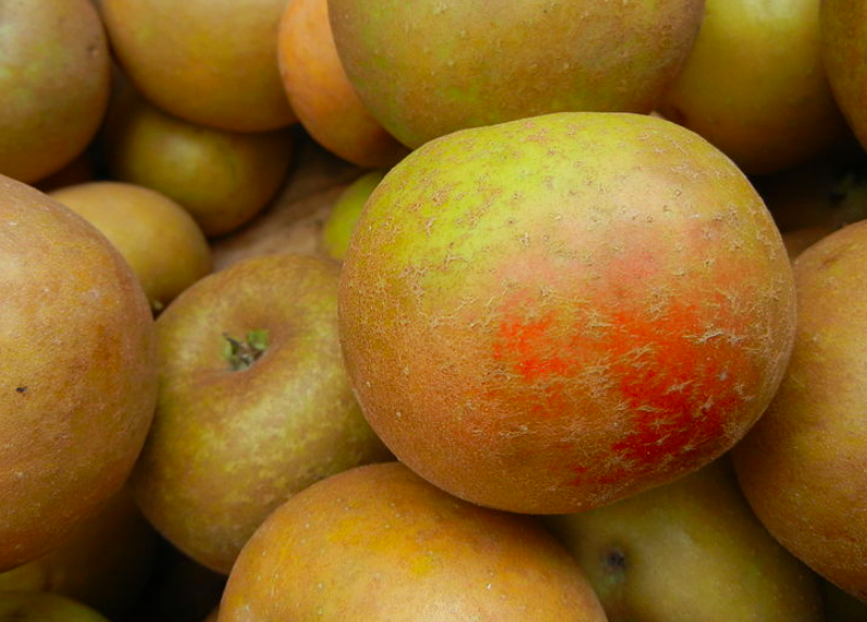 Ashmead's Kernel heirloom apples