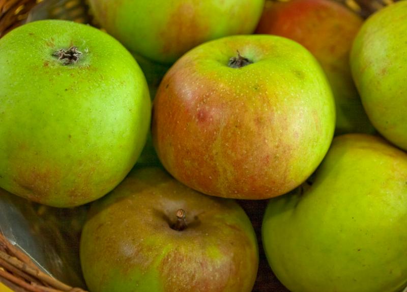 Blenheim Orange heirloom apples