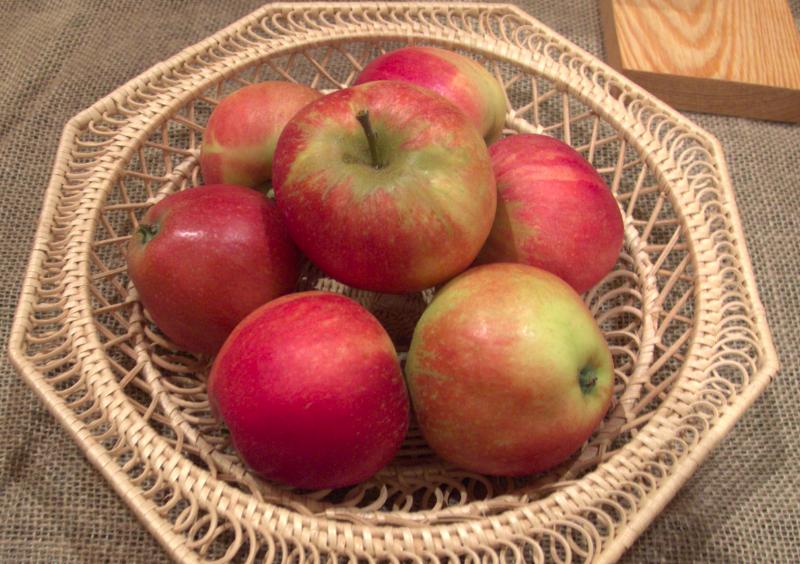 Worcester Pearmain heirloom apples