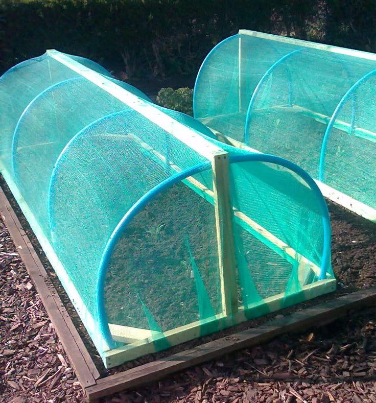 Nets help keep brassicas safe from caterpillars