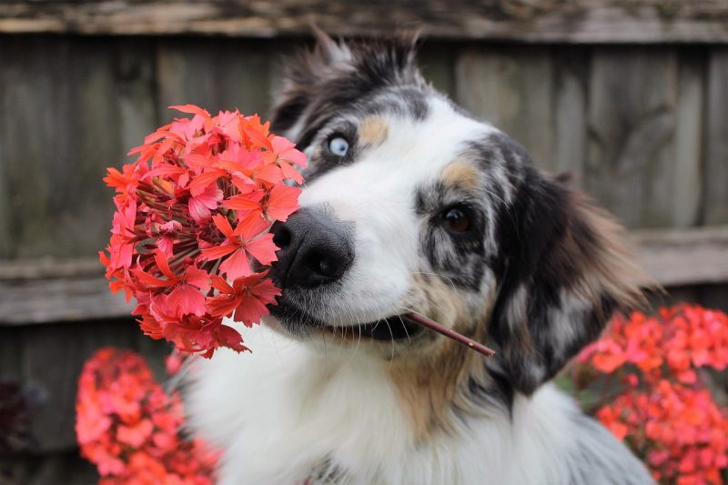 Keep dogs safe from poisonous flowers