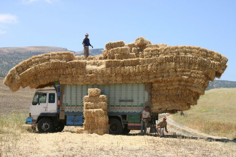 Straw vs hay bales