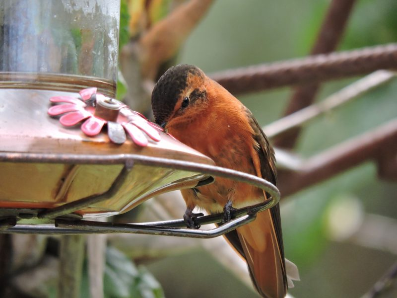 Best hummingbird feeder location