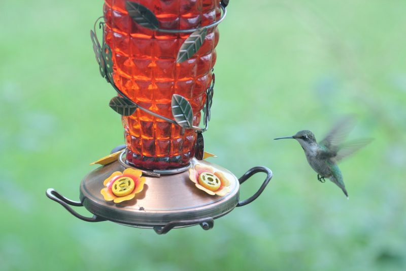 Best hummingbird feeder options