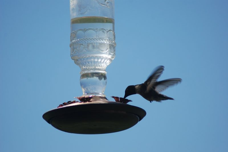 Inverted hummingbird feeder