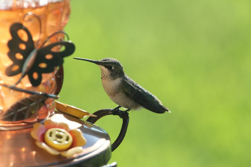 Hummingbird feeder with perches