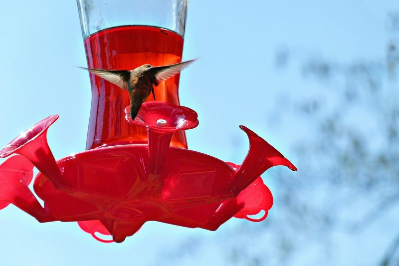 The best hummingbird feeder is usually red