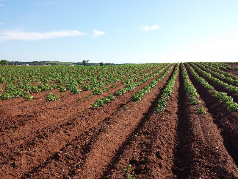 Tilled field