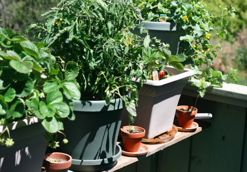 Balcony vegetable pots
