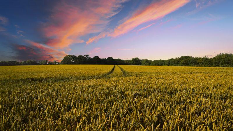 Monoculture vs. polyculture