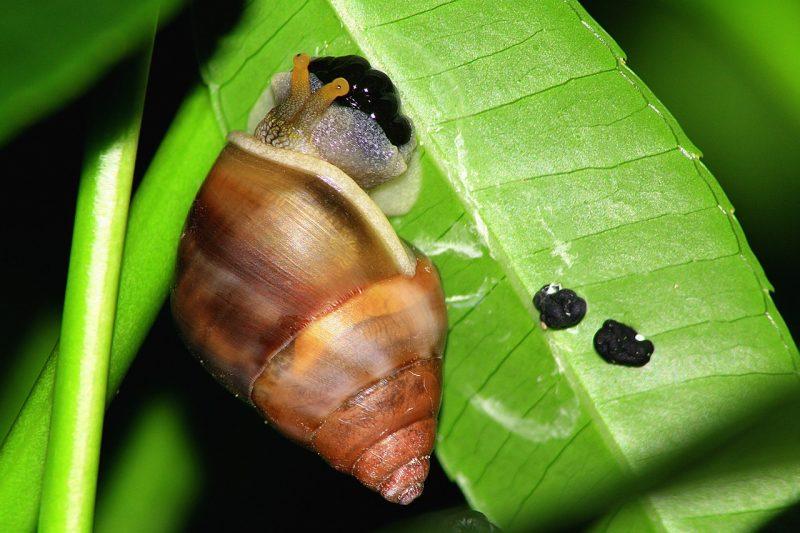 Garden pests like slugs