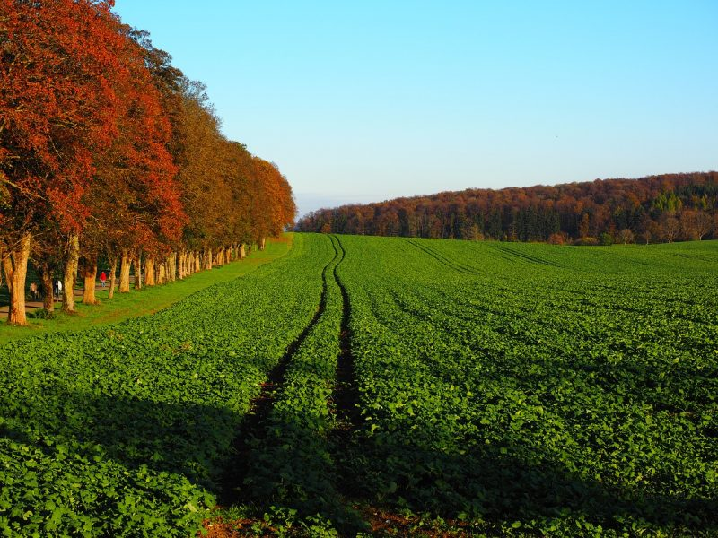 Benefits of green manure