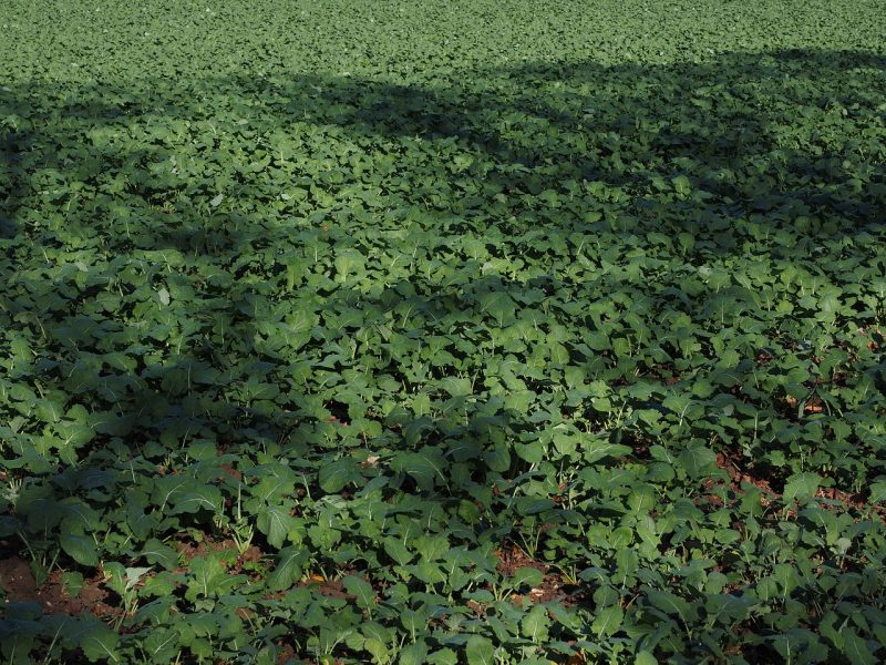 how to create green manure