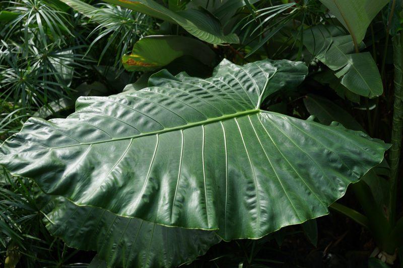 Healthy foliar feeding results