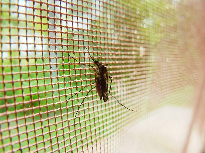 A mosquito killer helps keep your family safe