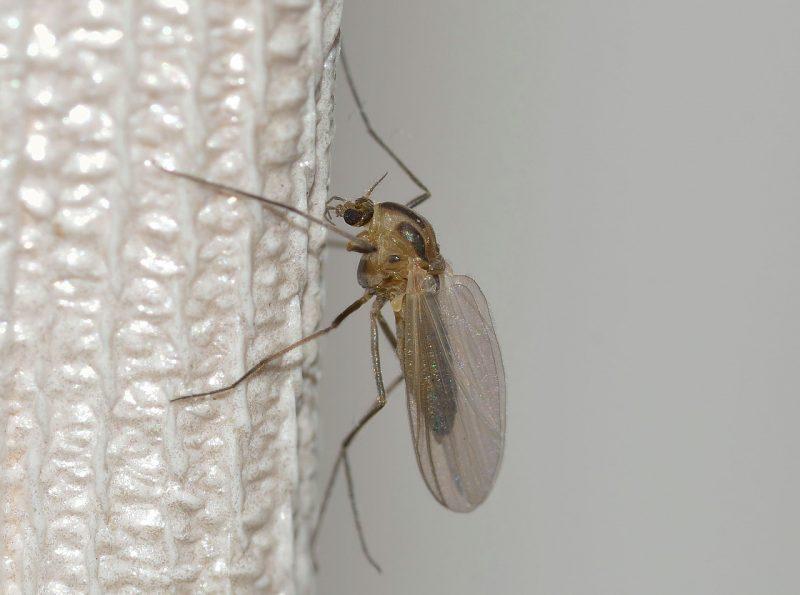 Sticky trap mosquito killer