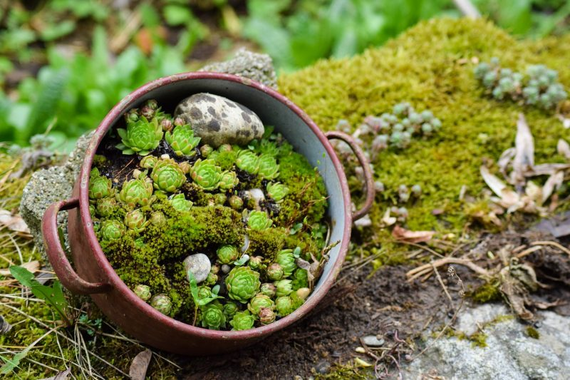 Mini succulent dish garden