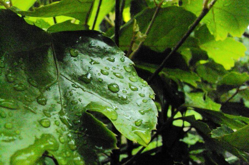 Foliar feeding on plant leaves