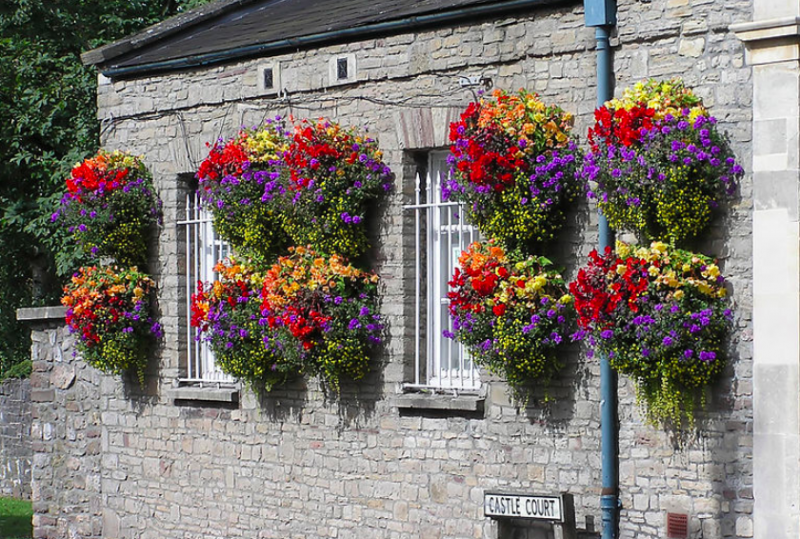 Hanging flowers for outdoor baskets