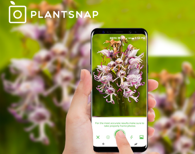 Plantsnap plant identification apps