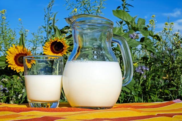 Milk for powdery mildew treatment
