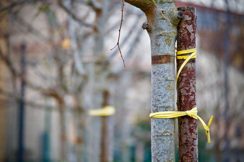 Tree staking