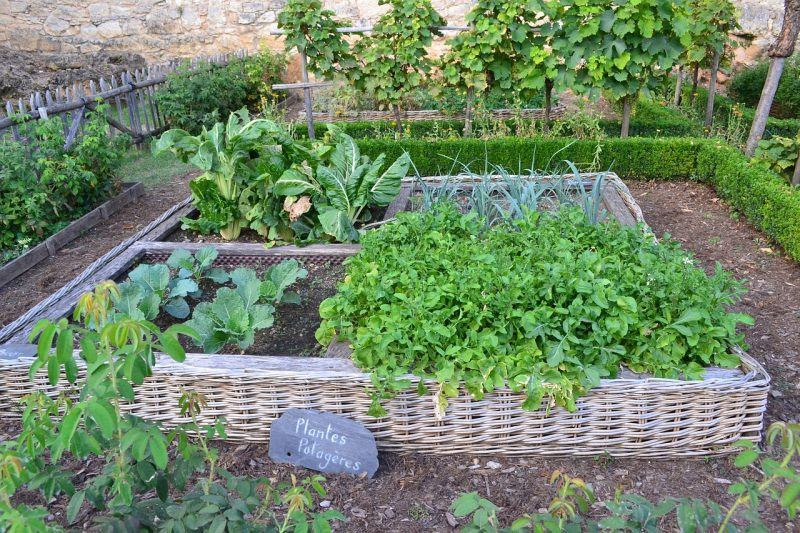 Medieval vegetable kitchen garden