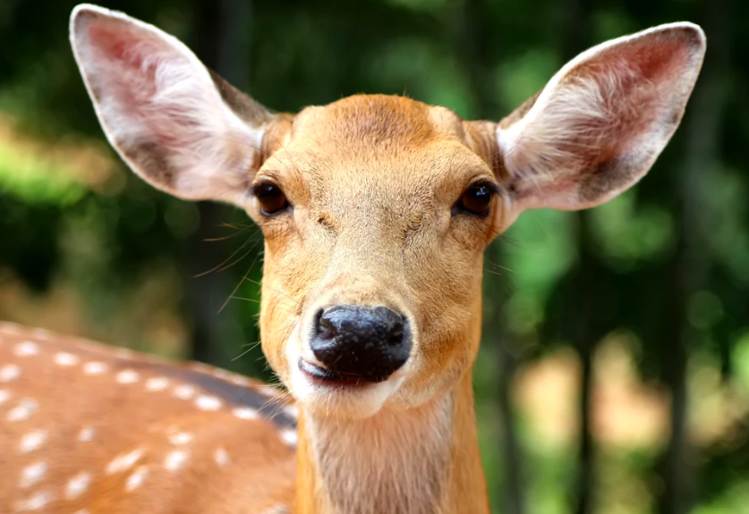 8 Steps to Keep Deer Out of Your Garden for Good