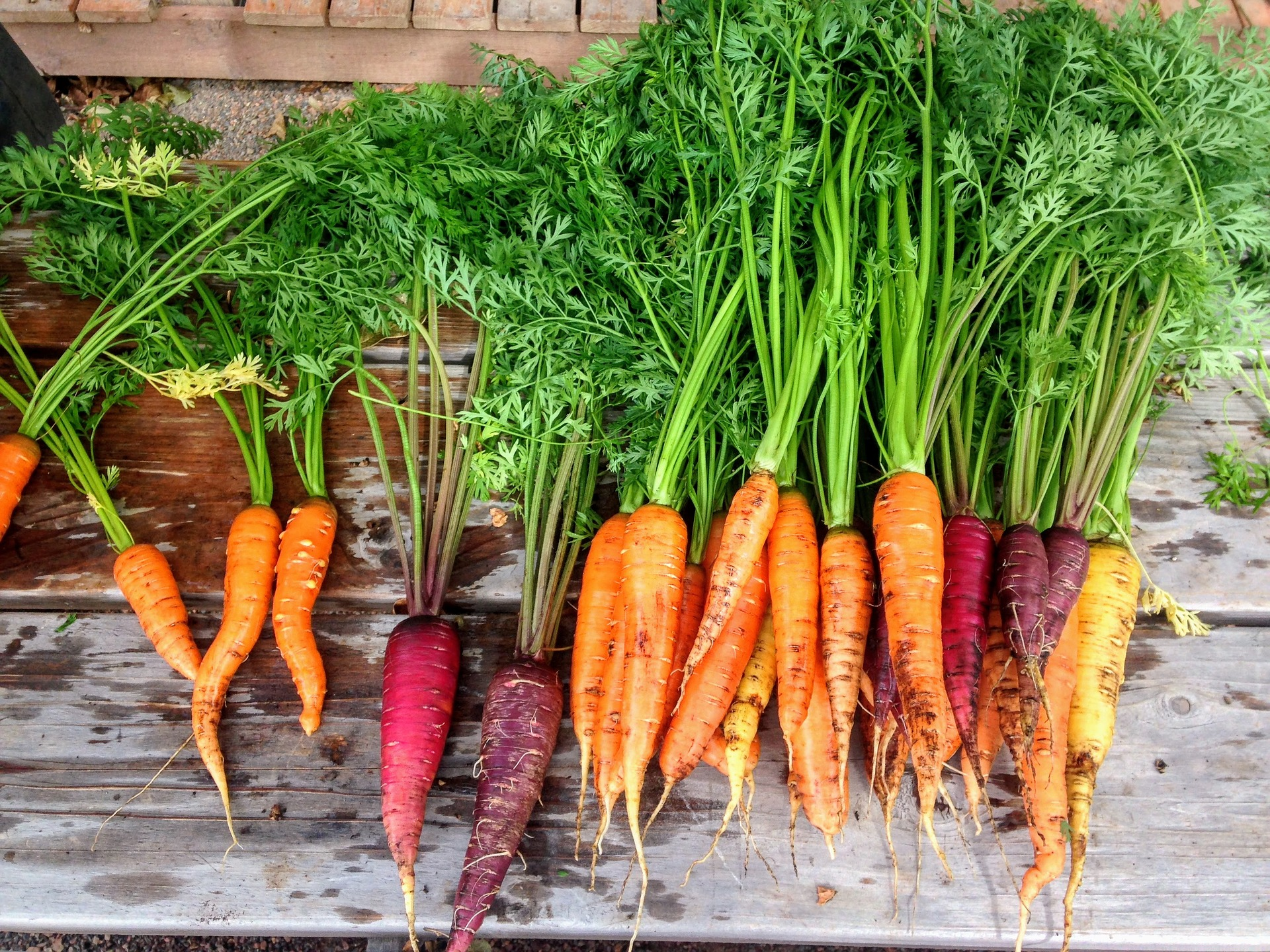 Why Fall is The Best Time to Plan Next Spring's Vegetable Garden