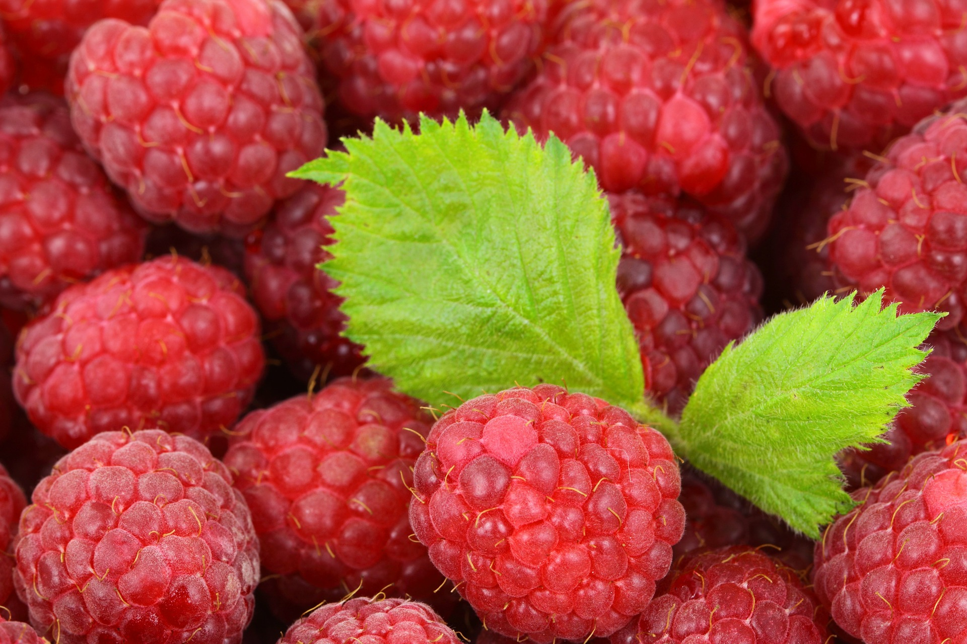 An Easy Guide to Pruning Raspberries Perfectly Every Time