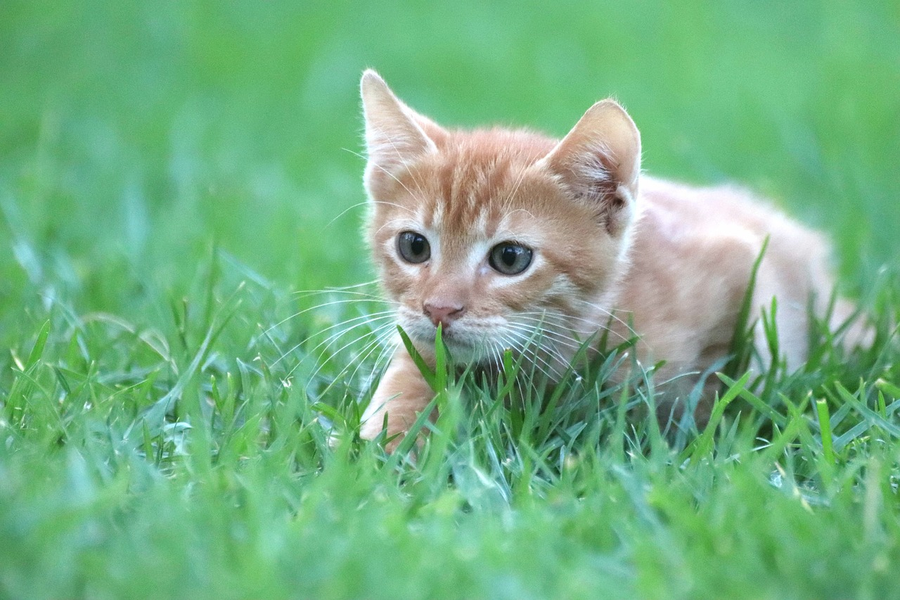 How to Grow Cat Grass for Your Feline Friends