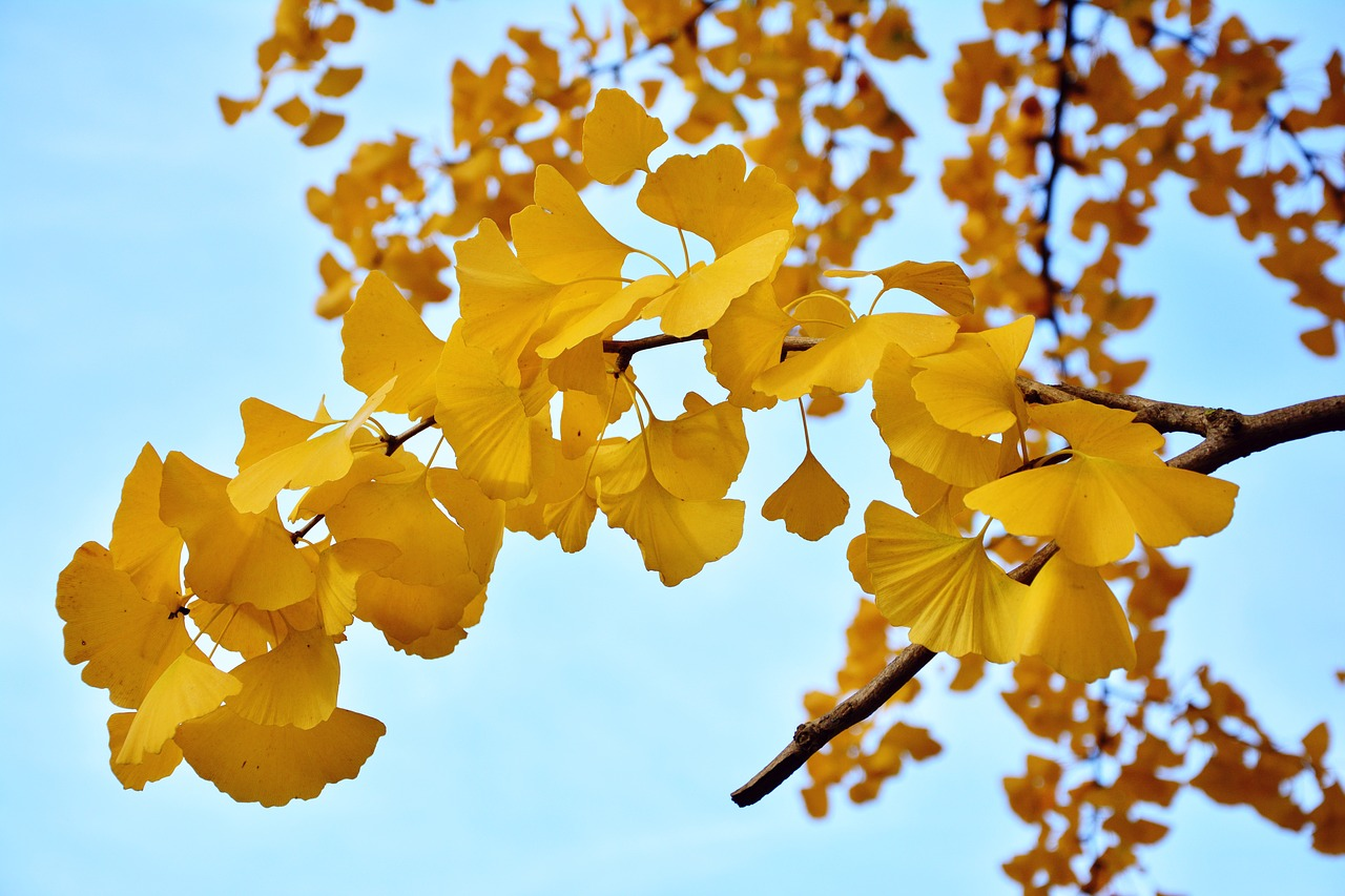 20 Surprising Ginkgo Tree Facts to Tantalize Your Brain