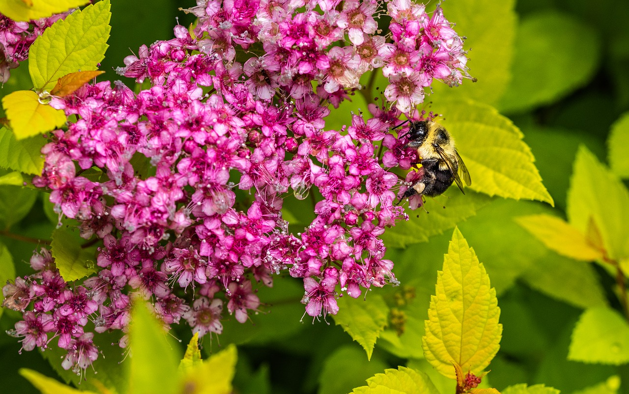 12 Stunning Full Sun Shrubs Perfect For Hot Dry Soils Garden