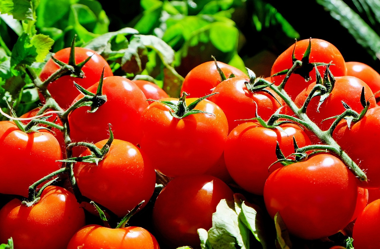 The Reason Why Using Epsom Salt for Tomatoes Makes Them Sweeter