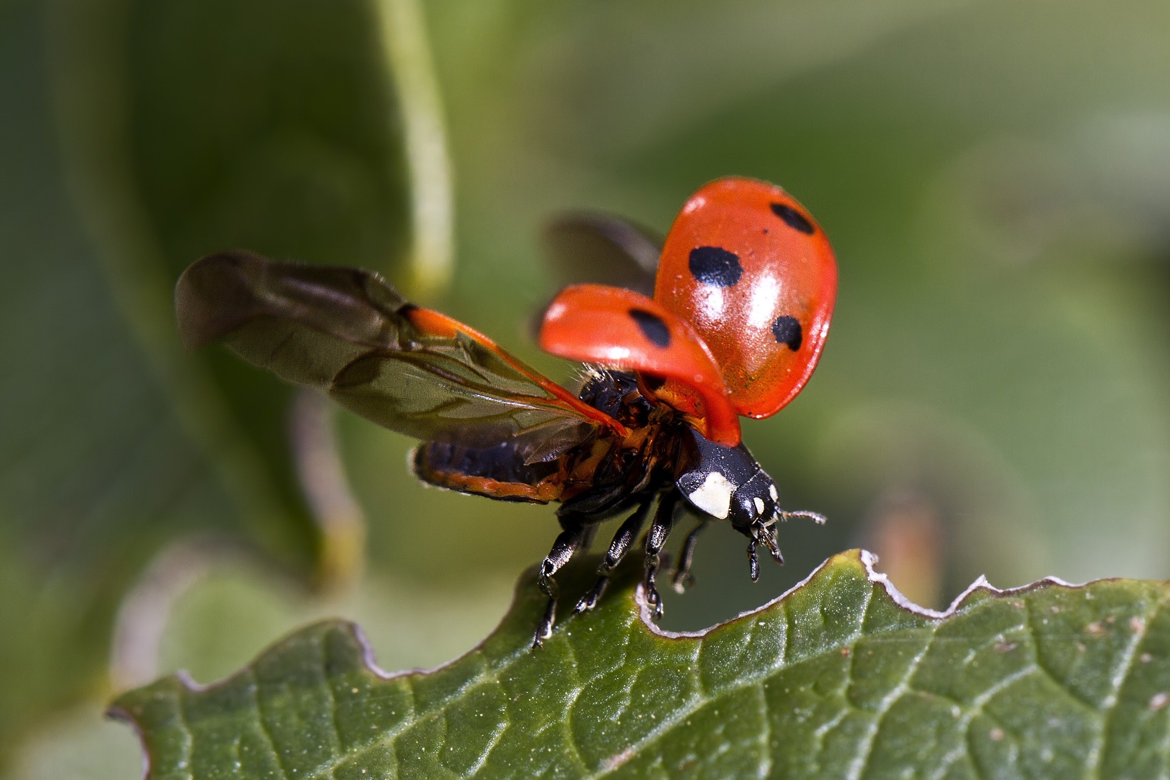 Why Introducing Baby Ladybugs will Improve Your Garden Immediately