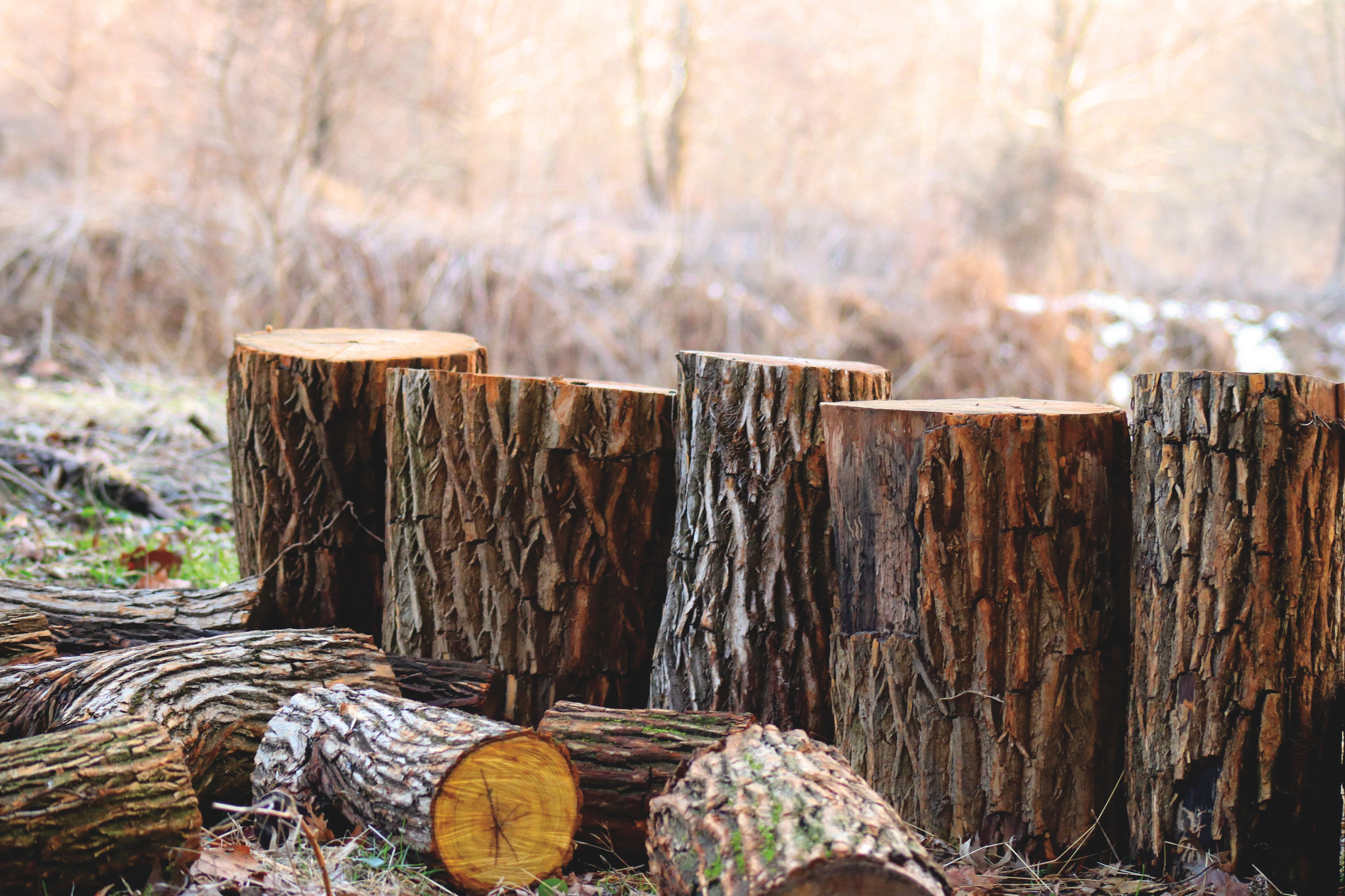 How to Kill Tree Stumps Using 6 Unexpected Natural Techniques