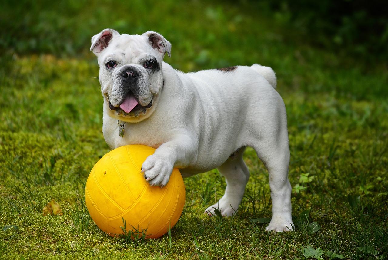 DIY Dog Repellent Recipes