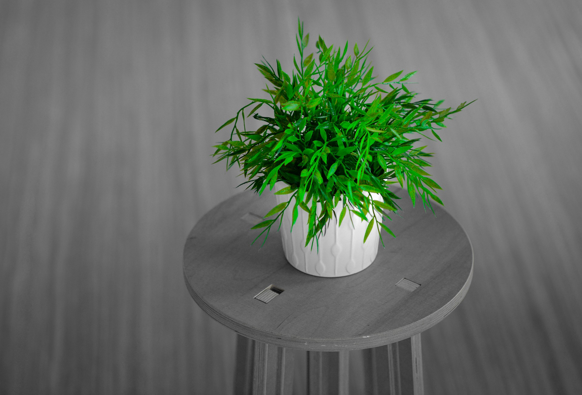 18 of the Best Desk Plants to Brighten up Your Office
