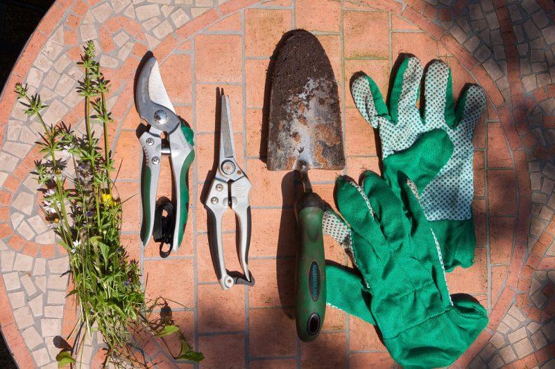 Prep patio plants for winter