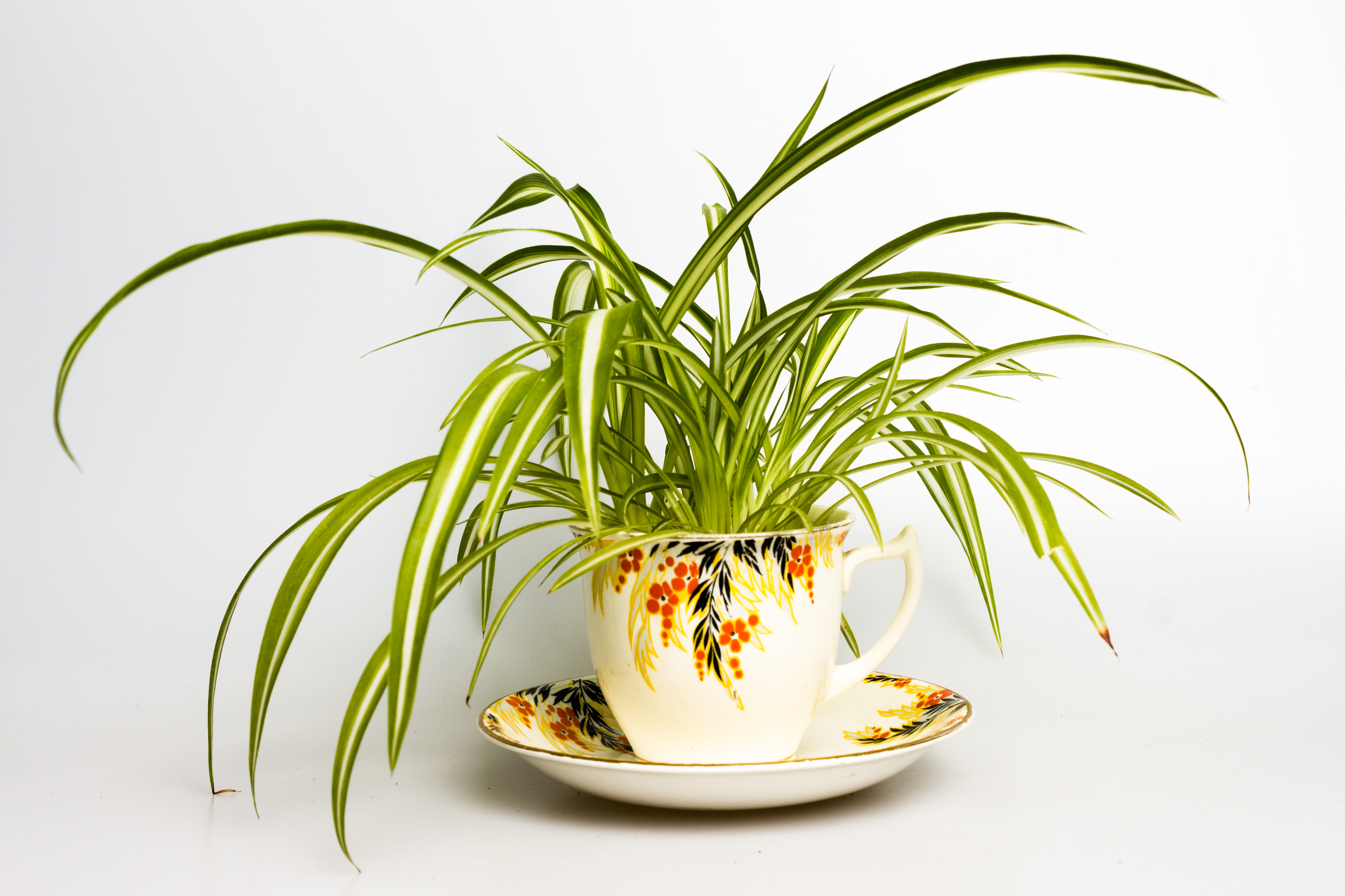 Spider Plant Care Tips to Keep Yours Happy and Healthy Forever