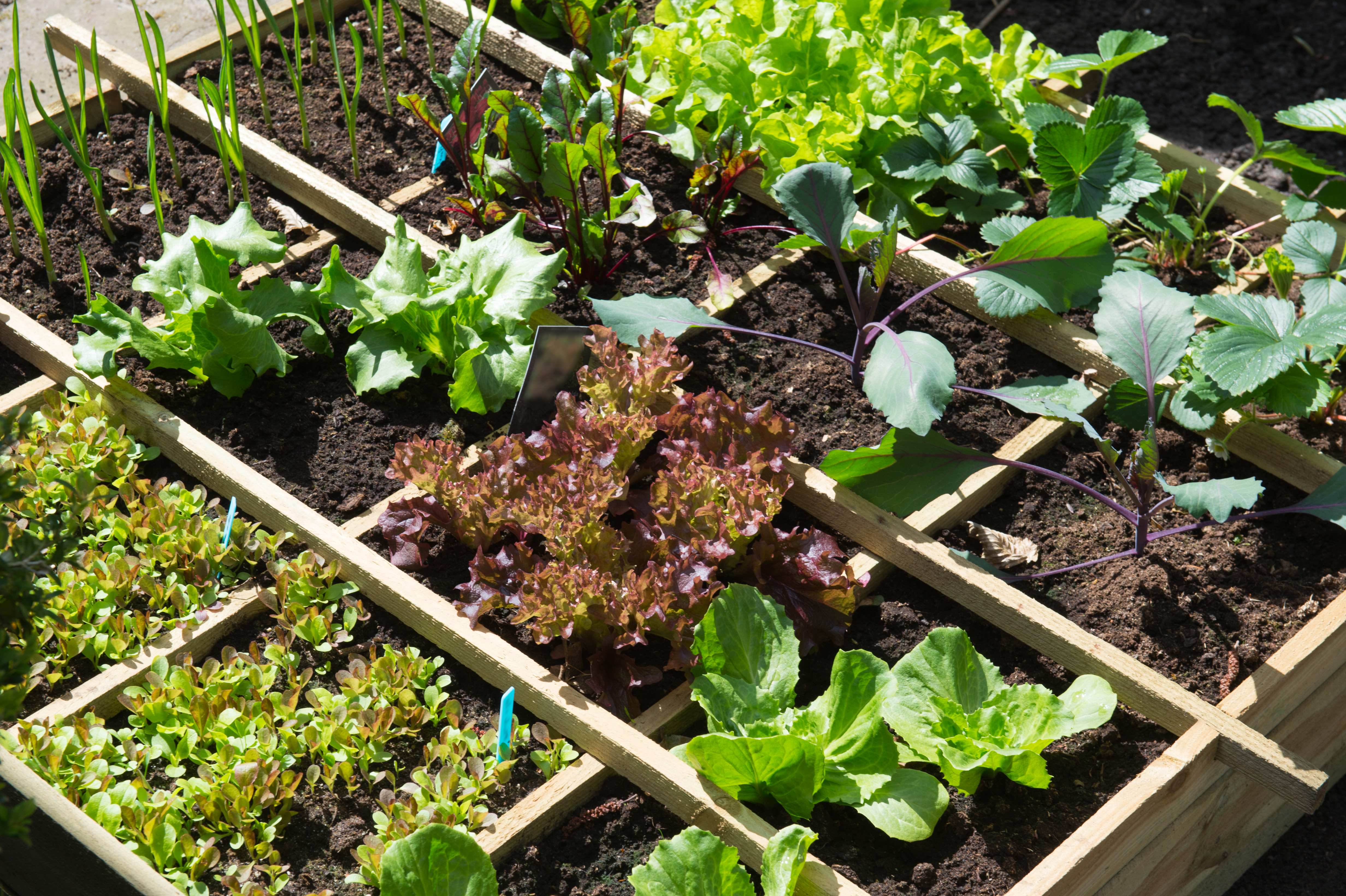 Square Foot Gardening: How to Start a Garden in a 1′ x 1′ Grid