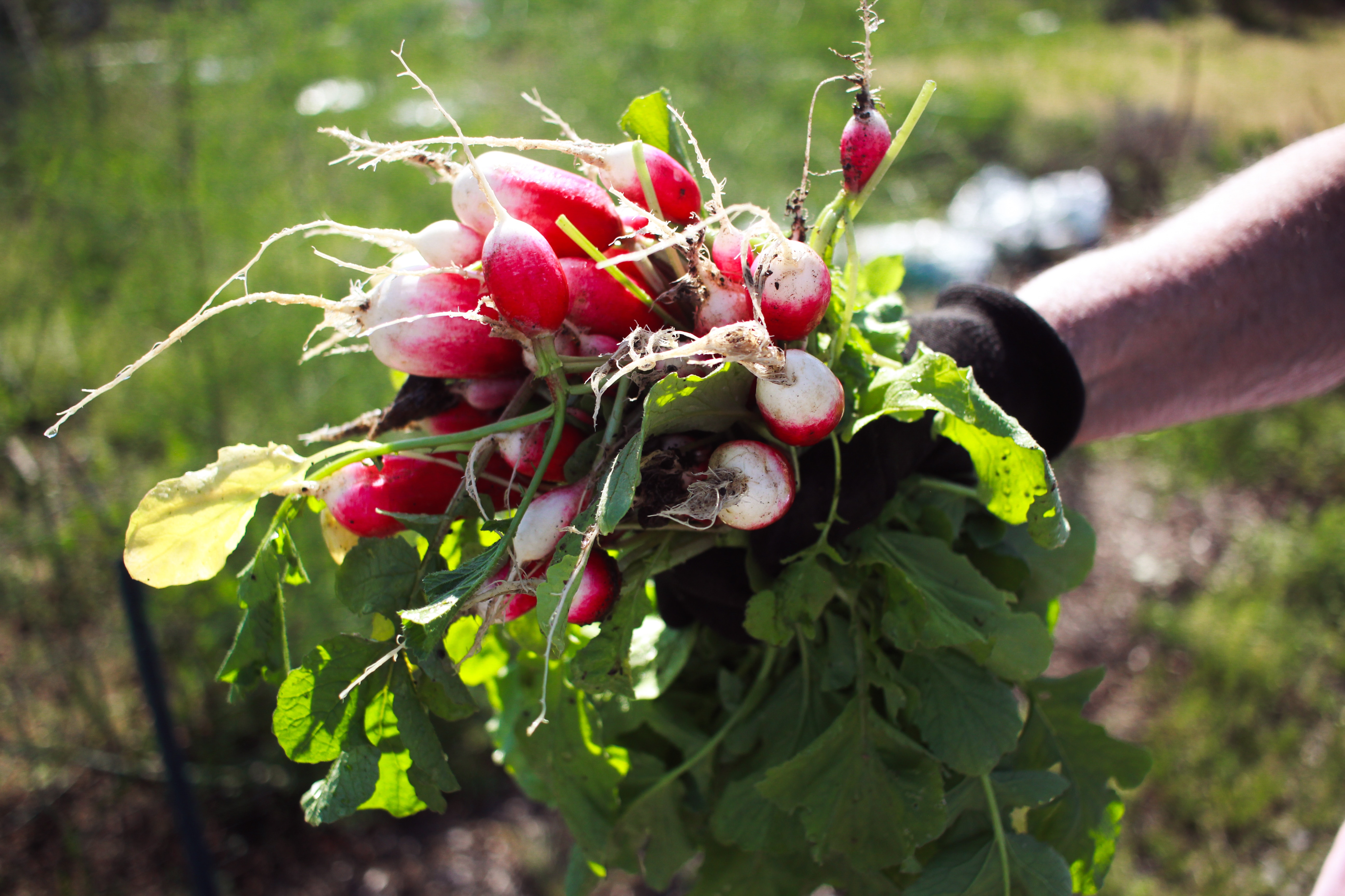 What do Turnips Taste Like? Discover these Delicious Roots Today!