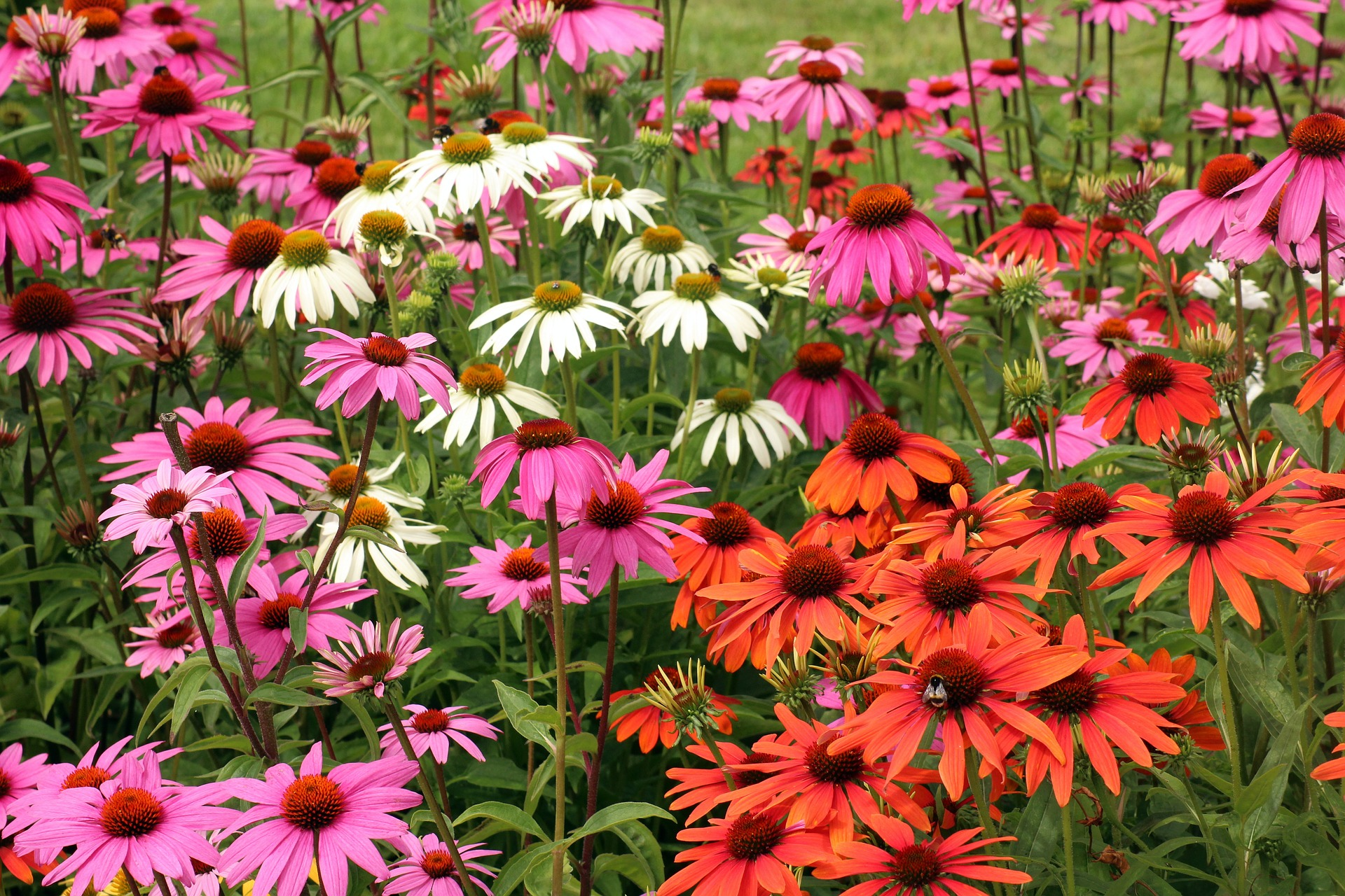 23 Favorite Butterfly Garden Plants for Attracting Helpful Pollinators