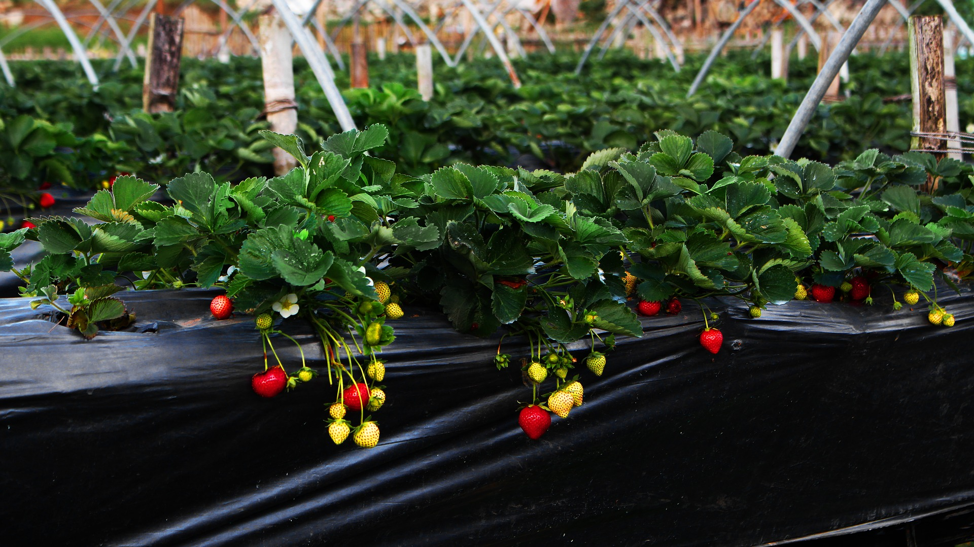 13 Things You Can Use as a Strawberry Planter
