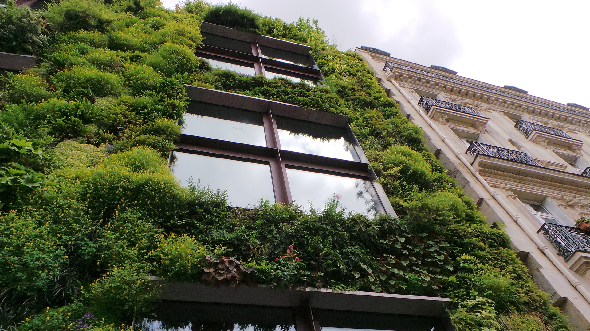 Beautiful Pictures of Urban Vegetable Gardens to Inspire Your Own