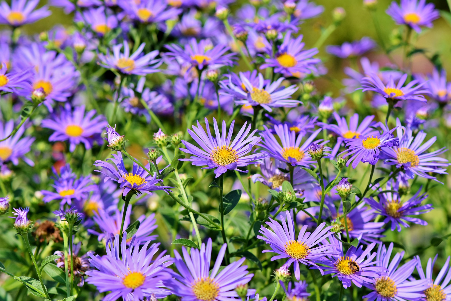 18 Best and Most Beautiful Flowers for a Bee Garden