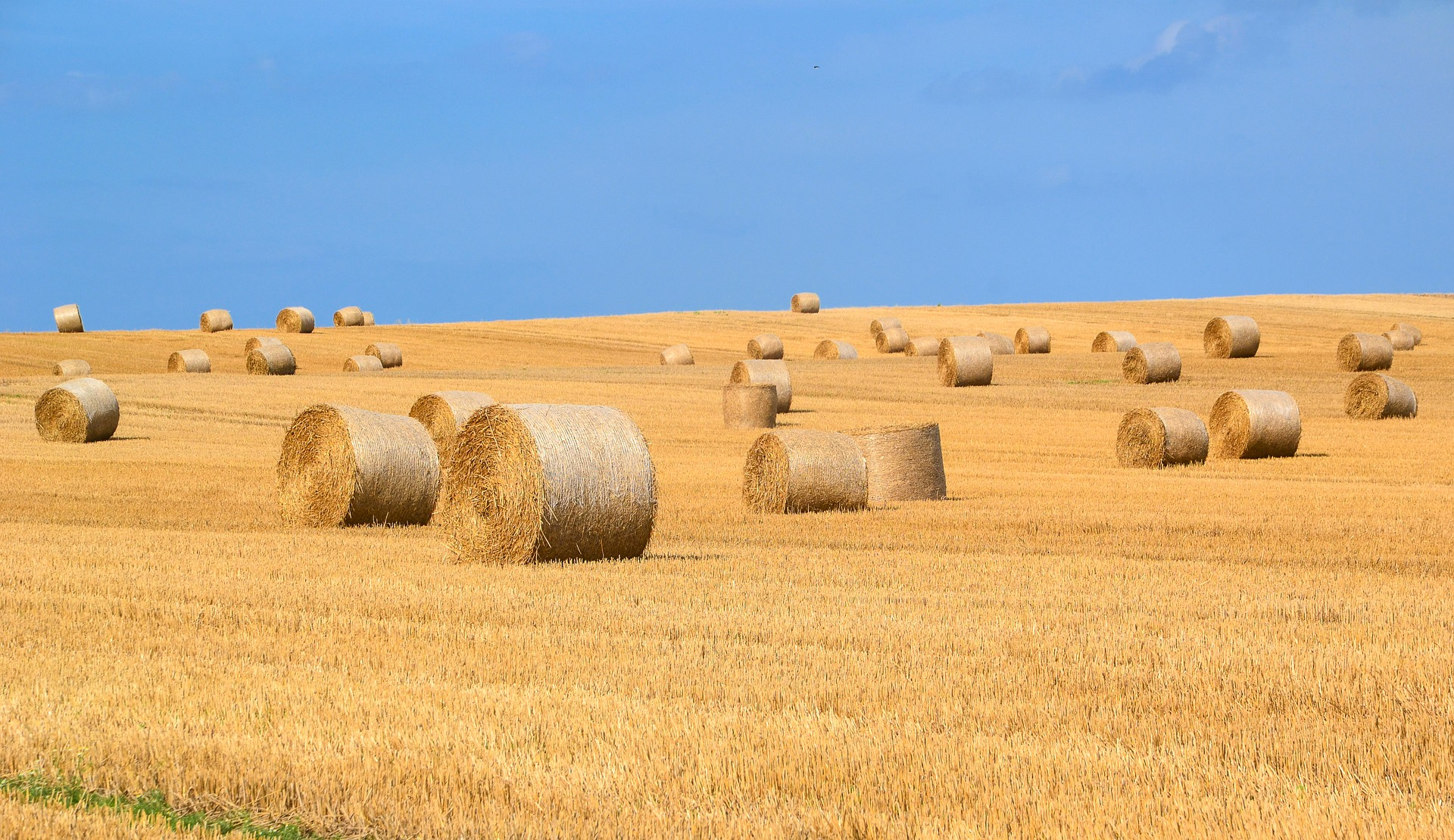 Using Straw vs Hay in the Garden: Which is Ideal for What Purpose?