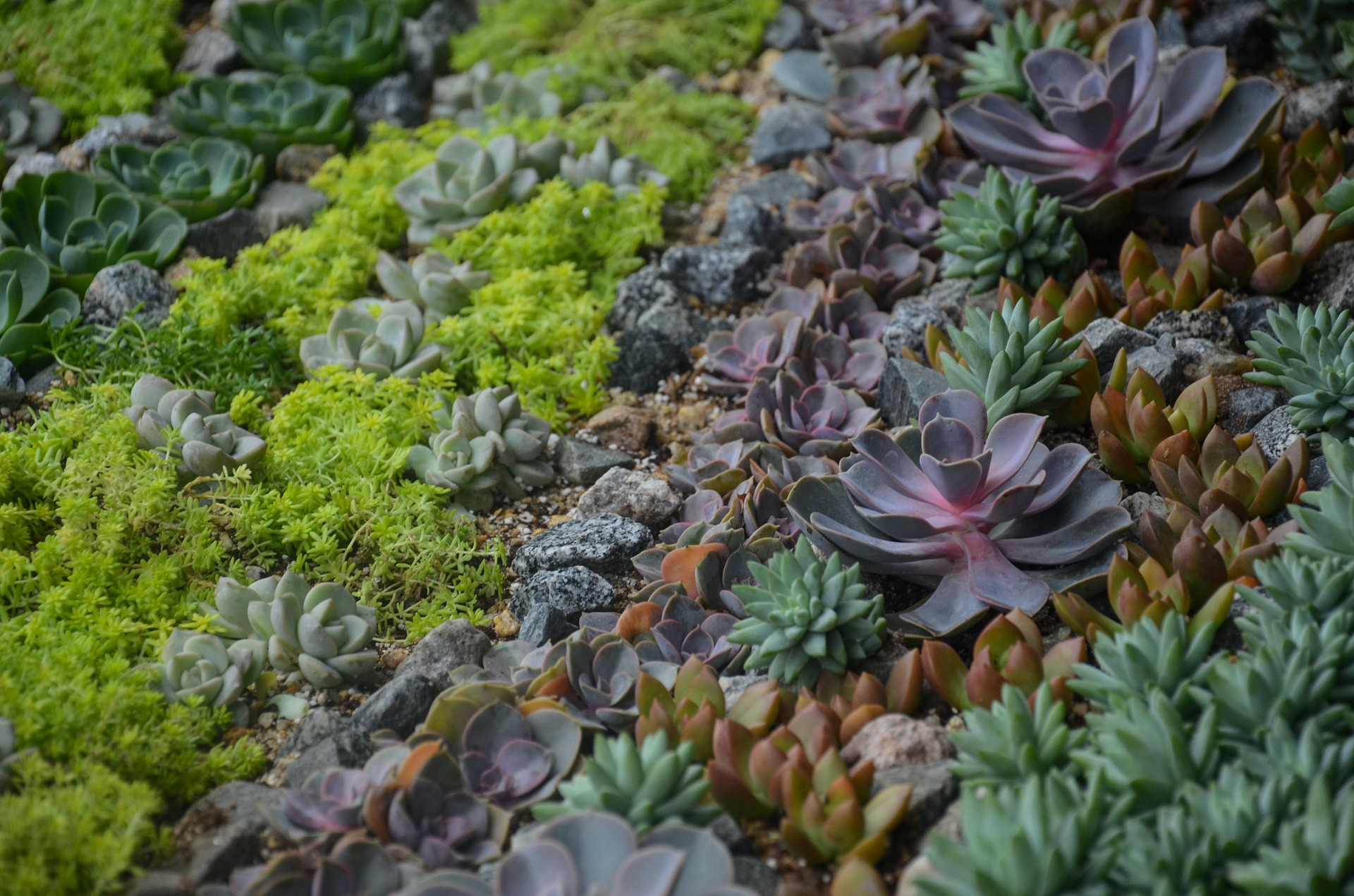Make a Stunning Succulent Dish Garden in 5 Simple Steps