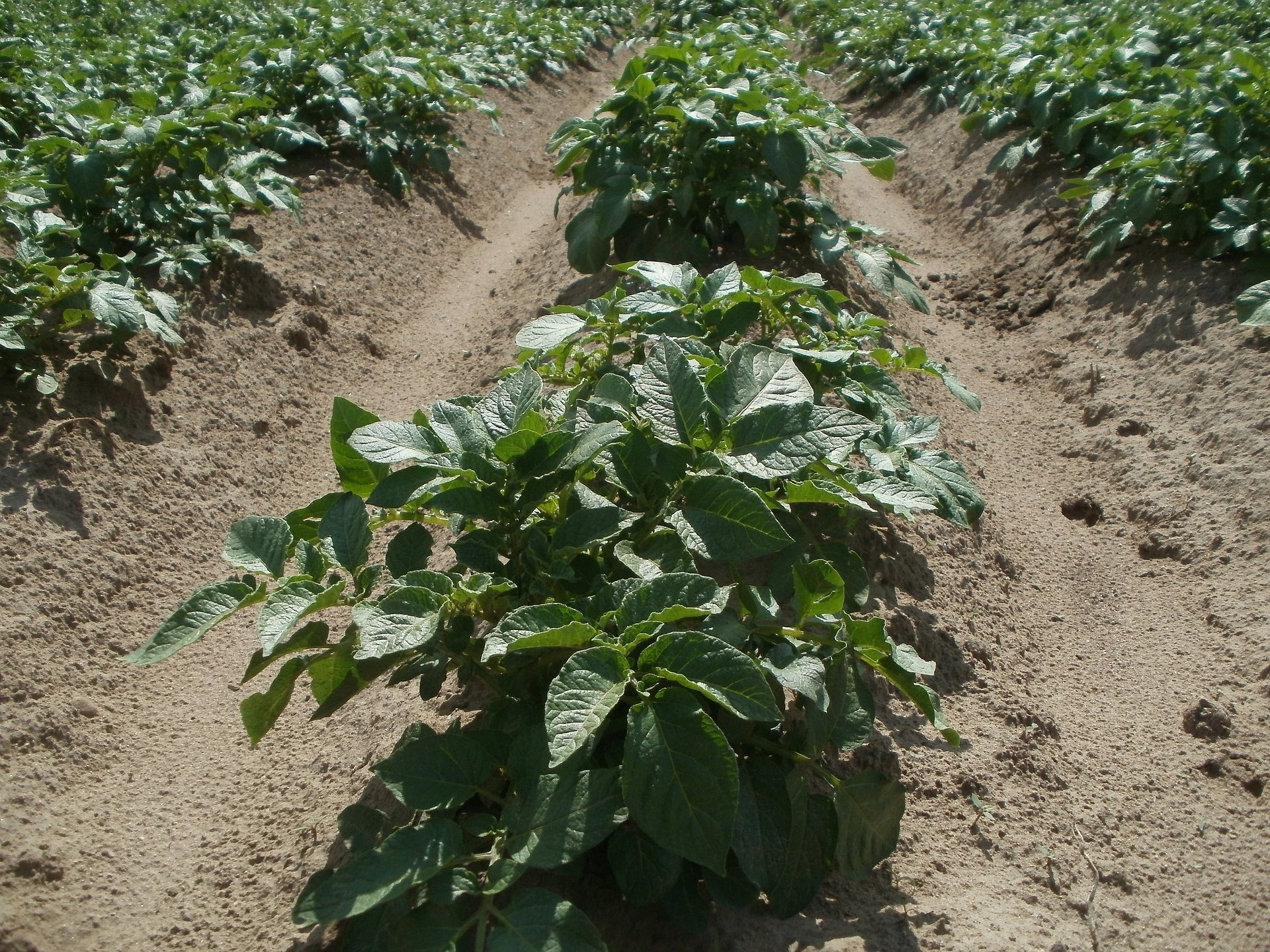 Intercropping 101: Maximize Space by Planting Crops Together
