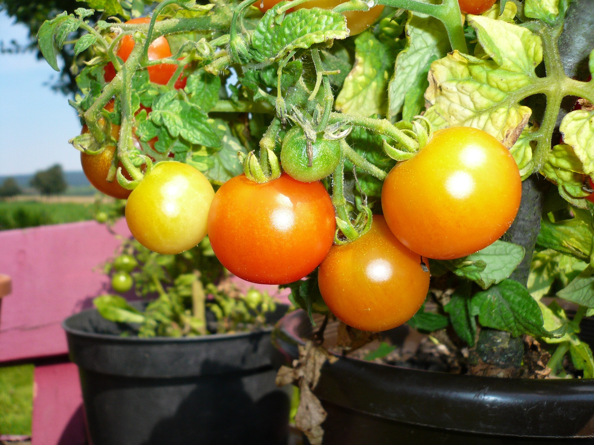 4 Ways to Maximize Growing Space with Container Vegetable Pots